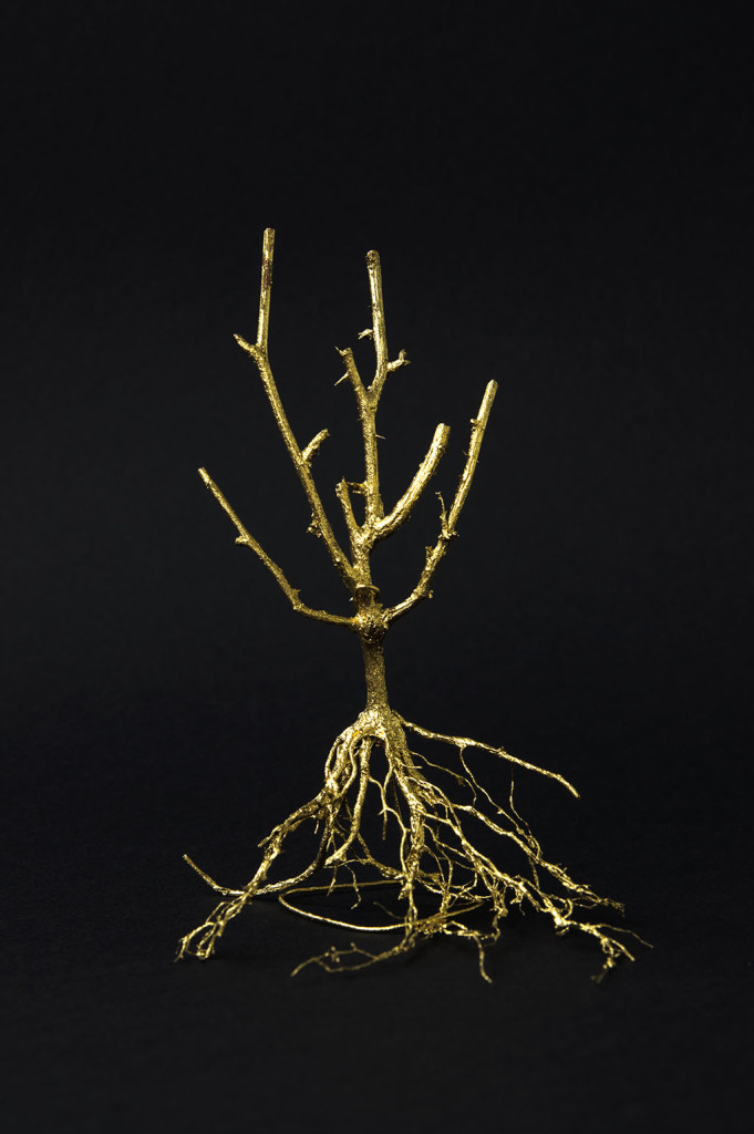 """""""Der Baum der Erkenntnis"""", stebü, 15.05.2017, Fotografie der Installation 50cm x 70cm"""